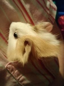 413d14f60eb50b23ade5ce86d8cd207a--pocket-pet-baby-guinea-pigs